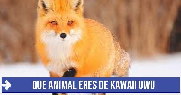 Test Que Animal Eres De Kawaii Uwu